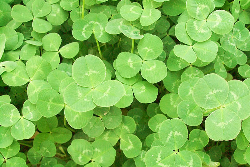 Irish Songs for St. Patrick's Day Fun