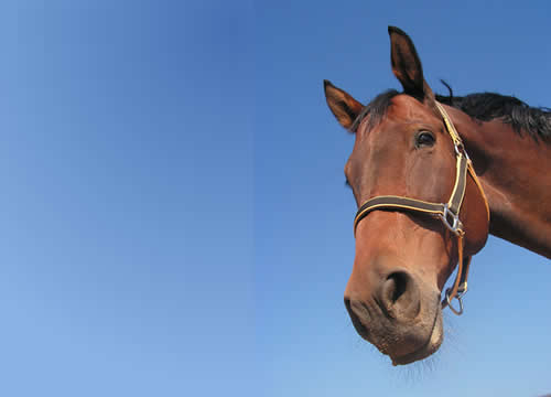 1611 What to Do When You Fall Off the Horse